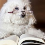 Cool facts about dogs
