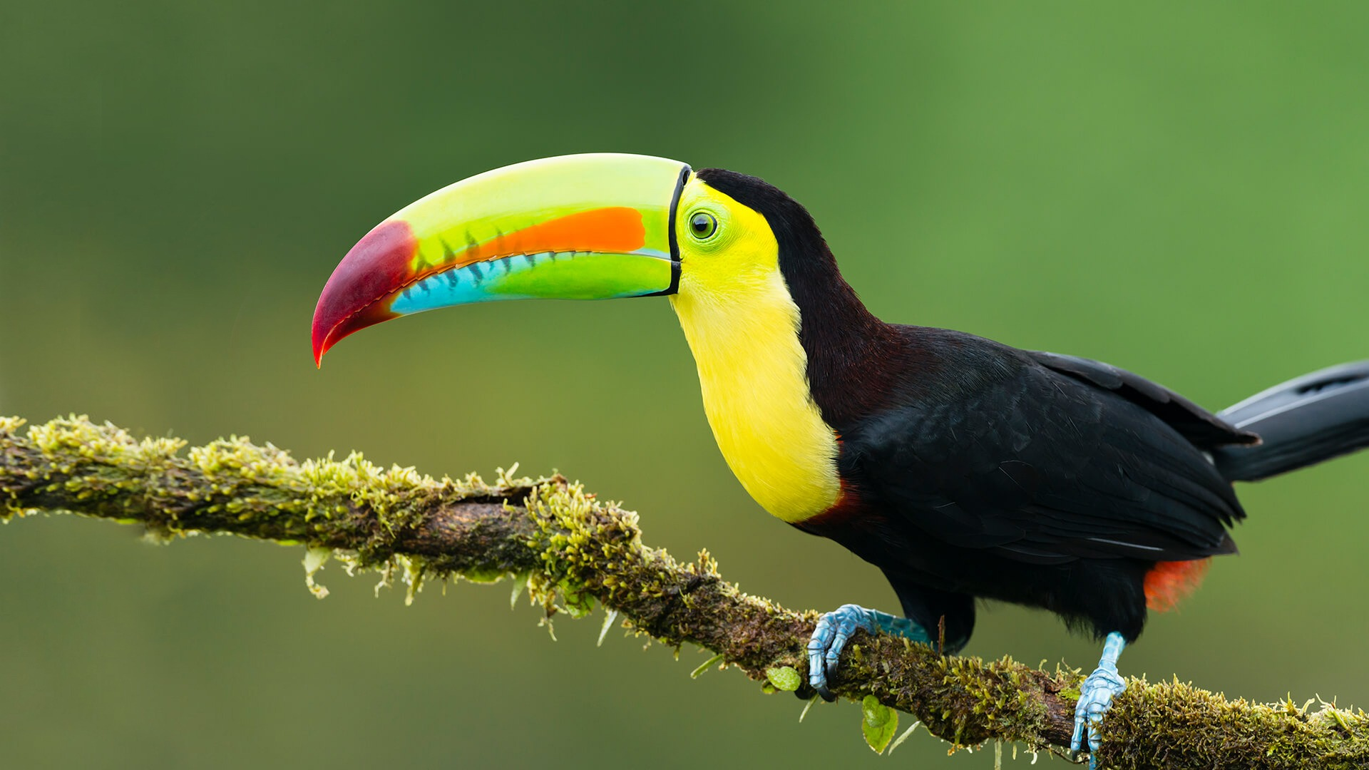 Amazing toucan facts