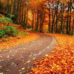 Fall facts for you
